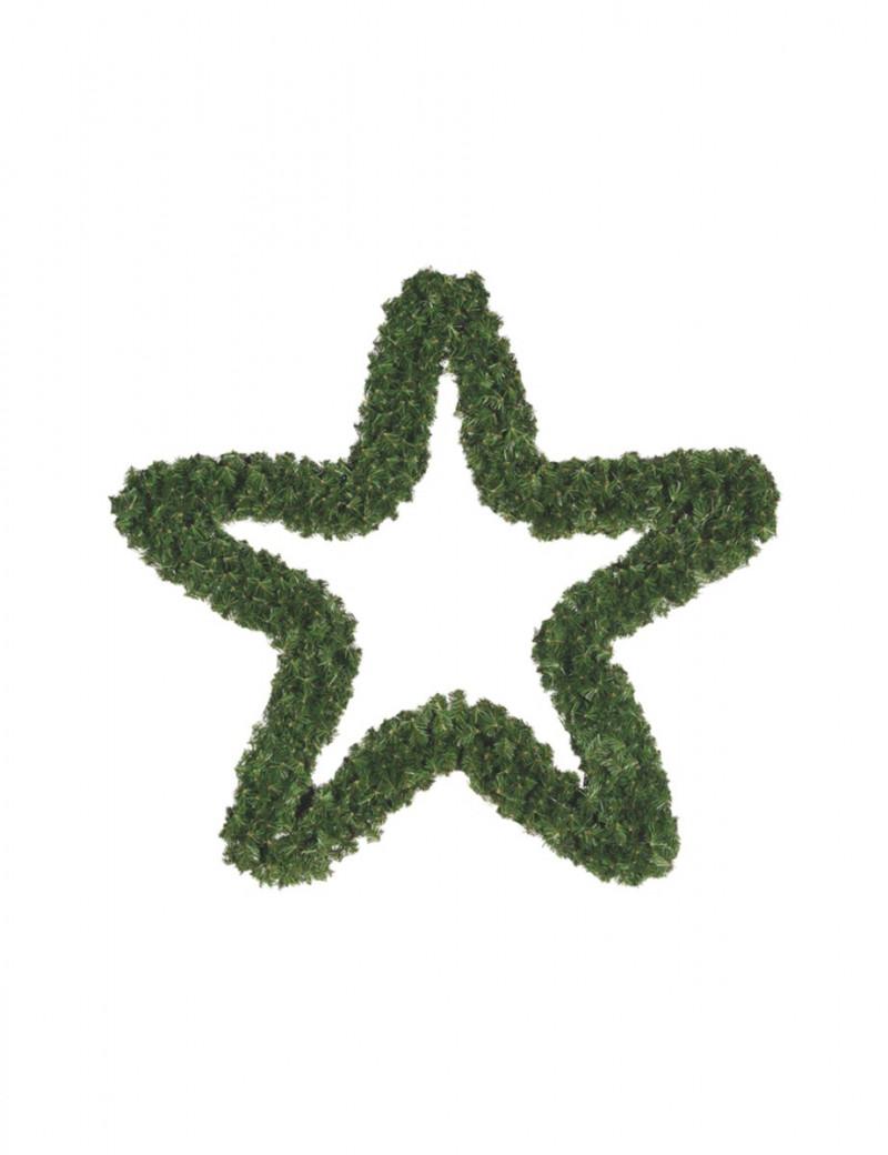 Gwiazda Królewska 90cm