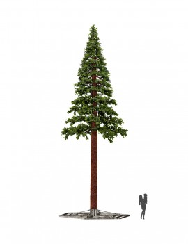 Pine Giant Tree
