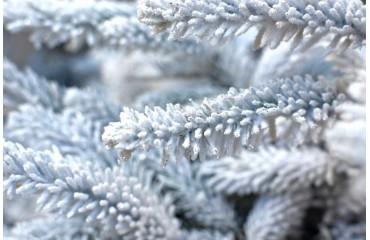 Białe choinki na pniu